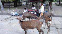 Galetes pels bambis